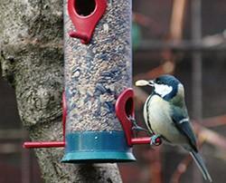Winterfütterungen von Vögeln