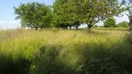 Streuobstwiese in Orscholz zur kostenfreien Nutzung